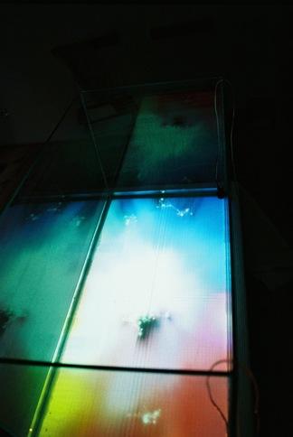 Pond Life III @ Projektraum Schwarz
